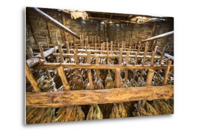 Tobacco Hanging in a Shed to Dry in the Best-Known Growing Region of Cuba, Pinar Del Rio-Michael Lewis-Metal Print