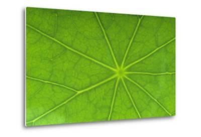 Close-Up of Nasturtium Leaf-DLILLC-Metal Print