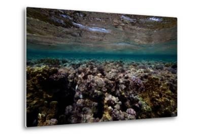 Coral and Other Marine Life in a Fringe Reef on Ant Atoll-Luis Lamar-Metal Print