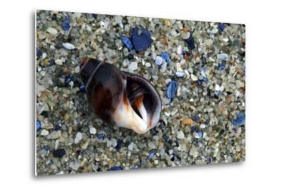 Close Up of Shell on a Beach, Lambert's Bay-Keith Ladzinski-Metal Print
