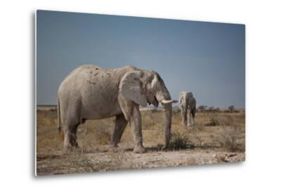 Two Bull Elephants in Etosha National Park, Namibia-Alex Saberi-Metal Print