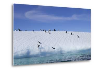 Adelie Penguins on a Frozen Slope-Jim Richardson-Metal Print