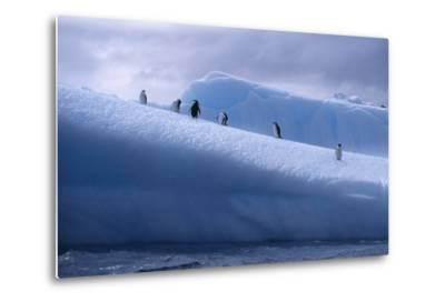 Chinstrap Penguins Standing on Ice-DLILLC-Metal Print
