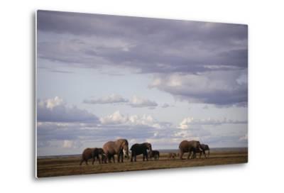Elephant Family-DLILLC-Metal Print
