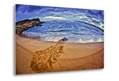 A Green Sea Turtle Entering Kawaloa Bay at Sunrise, Molokai Island-Richard Cooke-Metal Print