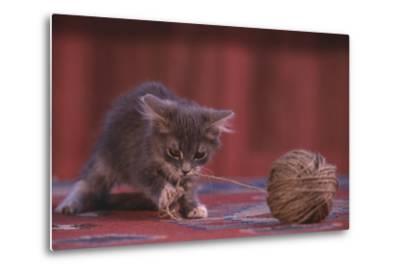 Kitten Playing with Ball of String-DLILLC-Metal Print