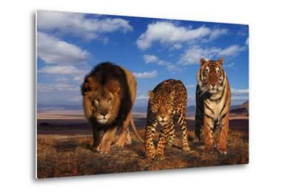 Lion, Jaguar, and Tiger-DLILLC-Metal Print