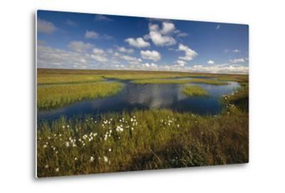 Arctic Tundra and Cotton Grass Summer Scenic North Slope Ak-Design Pics Inc-Metal Print