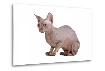 Sphinx Cat-Fabio Petroni-Metal Print