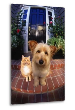 Terrier and Orange Tabby Waiting on Front Stoop-DLILLC-Metal Print