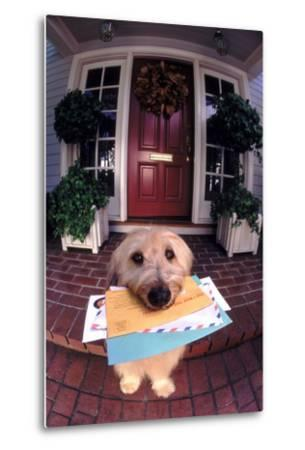 Dog Holding Mail-DLILLC-Metal Print