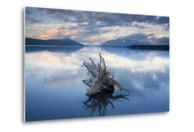 Driftwood Stump in Naknek Lake Katmai National Park Southwest Alaska Summer-Design Pics Inc-Metal Print