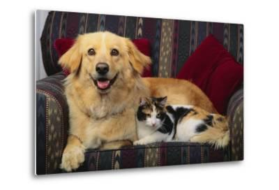 Dog and Cat Sitting in a Chair-DLILLC-Metal Print
