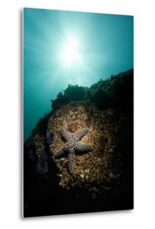 A Sea Star-Cesare Naldi-Metal Print