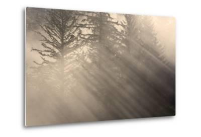 Morning Rays Shine Through the Mist and Spruce and Hemlock Trees Tongass National Forest-Design Pics Inc-Metal Print
