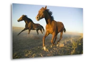Quarter Horses Running in Field-DLILLC-Metal Print