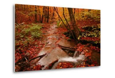 A Stream Flowing Through a Forest on an Autumn Day Near the New York/Vermont Border-Aaron Huey-Metal Print