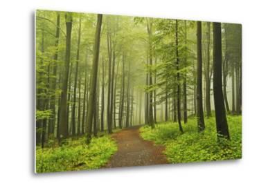 Morning Fog in Forest Near Bad Marienberg, Westerwald, Rhineland-Palatinate, Germany, Europe-Jochen Schlenker-Metal Print