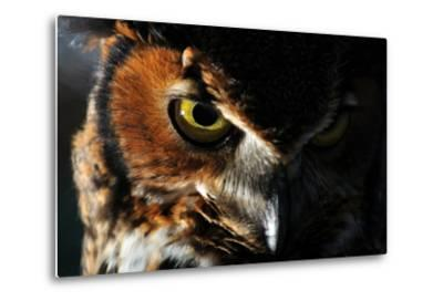 Portrait of a Great Horned Owl, Bubo Virginianus-Keith Ladzinski-Metal Print