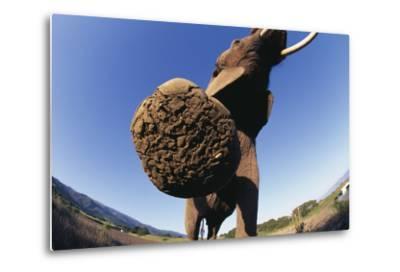 Bottom of Elephant's Foot-DLILLC-Metal Print