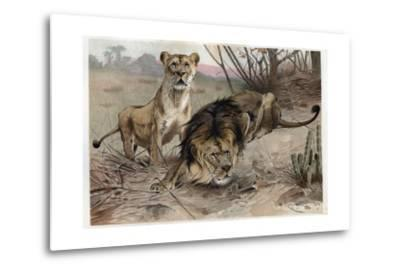 The Lion by Alfred Edmund Brehm-Stefano Bianchetti-Metal Print