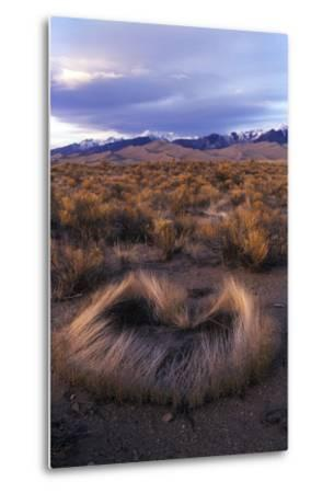 Scrub with Dunes and Mountains in the Distance, Great Sand Dunes National Park-Keith Ladzinski-Metal Print