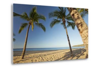 Hawaii, Lanai, Hulopoe Beach, Tall Palm Trees on a Beautiful Beach-Design Pics Inc-Metal Print