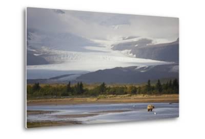 Young Grizzly Fishing at Hallo Bay, Katmai National Park, Alasaka-Design Pics Inc-Metal Print