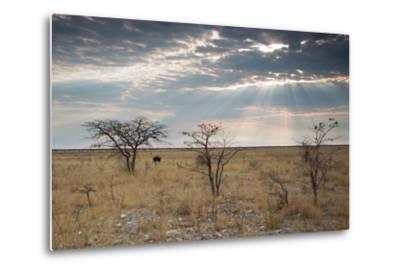 An Ostrich at Sunrise in Etosha National Park-Alex Saberi-Metal Print