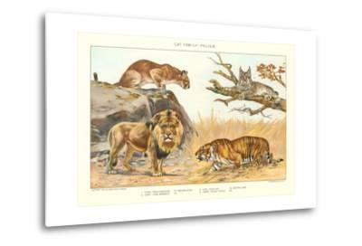The Big Cats--Metal Print