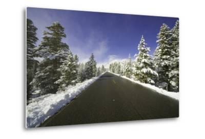 Mountain Highway among Snowy Trees in Inyo National Forest-Momatiuk - Eastcott-Metal Print