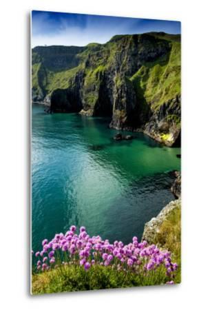 Sea Pinks at Carrick-A-Rede on the North Coast of Northern Ireland-Chris Hill-Metal Print