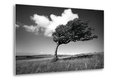 Wind-Swept Solitary Tree on Open Grassy Moorland-Design Pics Inc-Metal Print
