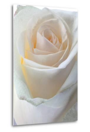 Roses-Fabio Petroni-Metal Print