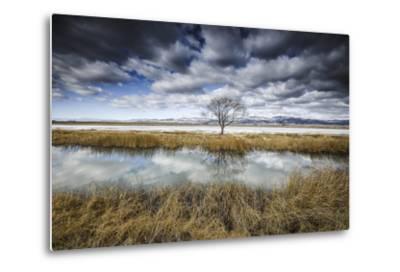Lone Tree Reflected in Water Near Del Norte, Colorado-Keith Ladzinski-Metal Print