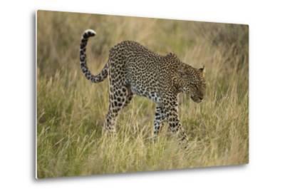African Leopard-Mary Ann McDonald-Metal Print