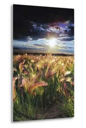 Grasses Blowing in the Wind, South Park, Colorado-Keith Ladzinski-Metal Print