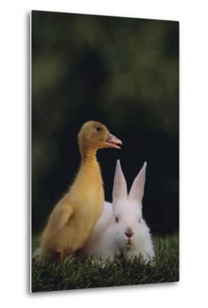 Duckling and Rabbit-DLILLC-Metal Print