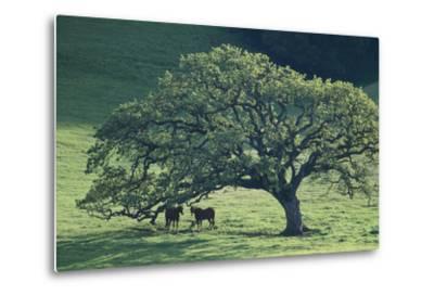 Horses in a Pasture-DLILLC-Metal Print