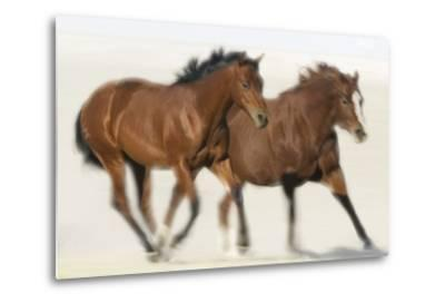 Galloping Quarterhorses-DLILLC-Metal Print