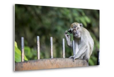 Long-Tailed Macaque at Batu Caves, Kuala Lumpur, Malaysia-Paul Souders-Metal Print