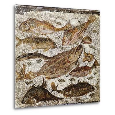 Roman Art : Fishes--Metal Print