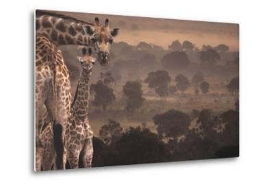 Giraffes in Africa-DLILLC-Metal Print