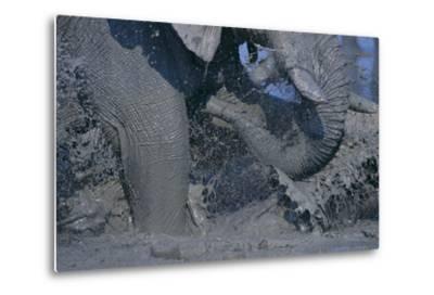 African Elephant Splashing in Watering Hole-DLILLC-Metal Print
