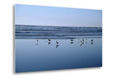Seagulls Standing on the Shore as the Waves Roll In-Design Pics Inc-Metal Print