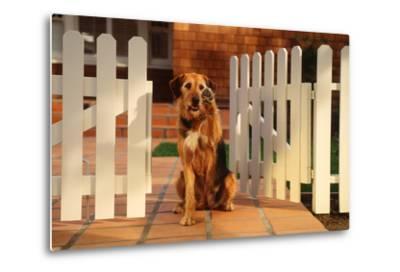 Dog Waving Goodbye from Gate-DLILLC-Metal Print