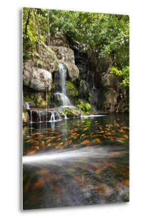 Koi Fish in Pond at the Garden with A Waterfall- luckypic-Metal Print