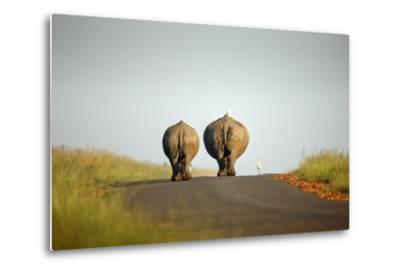 White Rhinos Walking on Road, Rietvlei Nature Reserve-Richard Du Toit-Metal Print
