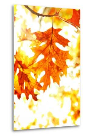 Colorful Autumn Leaves-soupstock-Metal Print