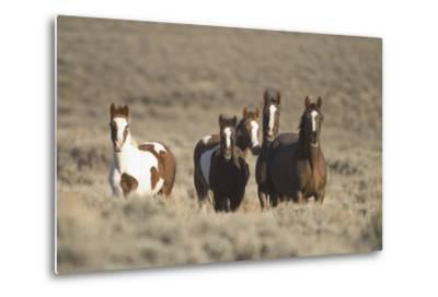 Herd of Wild Horses-DLILLC-Metal Print